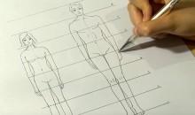 Les proportions Homme/Femme
