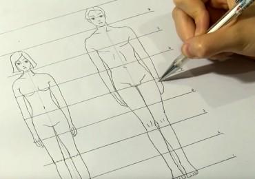 les différentes proportions homme femme